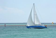 DSC_5988 (eric15) Tags: beach race cat surf sailing wind offshore competition surfing racing aruba international catamaran sail windsurfing regatta optimist sunfish 2014