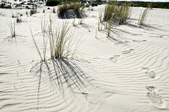 Parque Nacional de Doñana (España), Ecosistema de dunas (ipomar47) Tags: parque nacional doñana matalascañas huelva españa ecosistema national park ecosystem pentax k5 dunas dunes presentacion