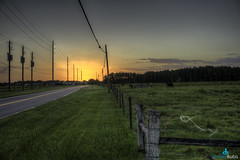 Countryside Sunset (dbubis) Tags: sunset tampa cattle florida farm country odessa livestock bubis westchase dbphoto nex6