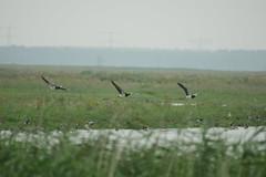DSC06431 (Ton Smilde) Tags: oostvaardersplassen naturereserveinthenetherlands