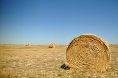 Summer Hay