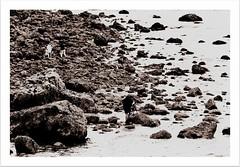 On the Rocks (Missy Jussy) Tags: people bw monochrome sepia wales canon landscape mono blackwhite rocks photographer unitedkingdom tamron llandudno cannon600d