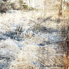 Frost (annelievonwowern) Tags: morning ice nature kyla spring frost natur freeze vr morgon rimfrost kld