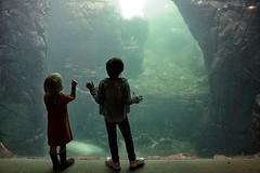Children Fascination (Jochem.Herremans) Tags: color water beautiful children child belgium seagull antwerp antwerpen