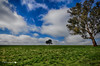 Forest Hill- Wagga (Struan Timms Photography) Tags: nikon nsw foresthill wagga riverina tokina1116mm28 nikond7000 nikhdreffex struantimmsphotography juneephotographer
