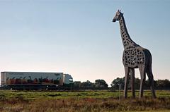 De Giraf-Homme Venema- (Astrid1949) Tags: drenthe emmen girafe ultimateshot hommevenema