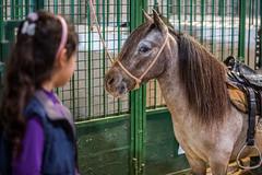 Expointer 2014 (Expointer2014) Tags: criana crianca ponei expointer esteio pnei seapa governodoriograndedosul expointer2014