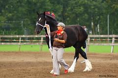IMG_3584-k (Mandy Bramavi) Tags: show horse shire