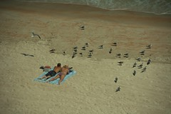 Feeding Gulls (Mike McCall) Tags: couple feeding florida gulls daytonabeach daytona mikemccallphotography 2014mikemccall