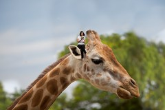 124/365 (Jessie Rose Photography) Tags: zoo giraffe tinypeople selfportrait elephant miniature 365 365project 365challenge