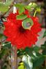 20160924_Cinq_Sens_Yvoire (1 sur 13) (calace74) Tags: fleurs macro jardinsdes5sens yvoire rhonealpes foretderipaille hautesavoie nature panorama thononlesbains