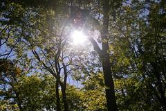 Divine light (candiceshenefelt) Tags: light sunlight sunny sun trees divine love wisdom friendship truth