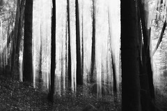 (Kévin Proust) Tags: monochrome forest blackandwhite forêt nature dark limousin france lines abstract tree trees light atmosphere canon50d