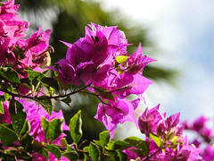 Hawaiian Flowers & Trees (3)