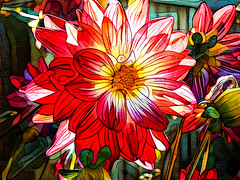 A sunny Afternoon (Steve Taylor (Photography)) Tags: art digital fence light green white red yellow orange closeup newzealand nz southisland canterbury christchurch northnewbrighton plant flower dahlia bud petals leaves lines outline curve sunny sunshine deepdreamimagegenerator