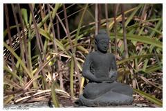 Znitude (photos.osmose) Tags: zen znitude campagne calme envol sentiers enfance extrieur tang t vasion eau soleil solitude sp