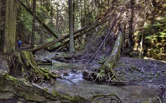 the size of things (Keith.CA) Tags: trees fallentrees forest valley water stream britishcolumbia margaretfalls shuswap hiking trekking