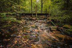 Taunus Hohe Mark 3 (JTPhotography) Tags: taunus nature water wild hessen frankfurt forrest panasoniclumixg6 longtermexposure olympus918mm panasonic1445mm trees river bridge