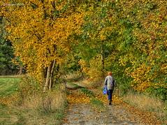 Autumn tour (GerWi) Tags: autumn herbst landschaft tour pflanzen spaziergnger bume outdoor pflanze laub baum heiter