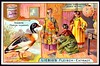 Liebig Tradecard S803 - The Sheldrake (cigcardpix) Tags: tradecards advertising ephemera vintage liebig chromo birds