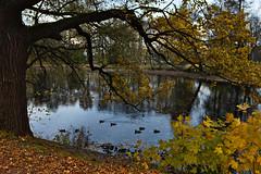A Duck Pond (kanyck) Tags: pond ducks autumn leaves