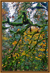 Moss, Branches & Leaves (johnscratchley) Tags: naturehdr moss leaves trees autumn