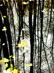 reflection (Darek Drapala) Tags: water waterscape reflection reflects autumn forest trees tree leaves nature panasonic poland polska panasonicg5 lumix light