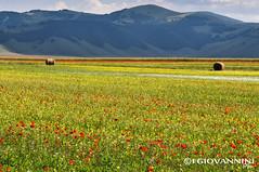 Piani di Castelluccio (-Fla-) Tags: umbria castellucciodinorcia castelluccio piangrande lenticchie norcia natura spettacolo nature monti sibillini monte vettore fioritura