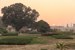 0W6A8611 (Liaqat Ali Vance) Tags: landscape nature trees people sunset google yahoo liaqat ali vance photography lahore punjab pakistan
