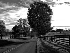 Delong Road Early Nov (alfredo_tomato) Tags: lexingtonky olympusem10 lumix20mm17 farmland landscape black white