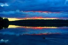 Evening duck (sakarip) Tags: sakarip lake summer finland water duck bird reflection evening sunset clouds sky lakescape landscape luumäki pahainlahti kontula serene still calm peaceful