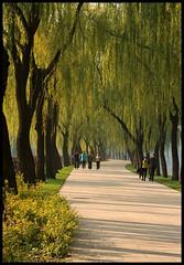 Summer Palace (Rantes) Tags: summerpalace beijing pekin chiny china willowtrees pathway