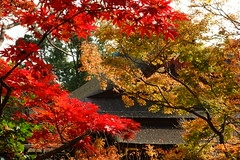 DSC02782 (MrSUIZOU) Tags: 京都 紅葉 北野天満宮 平野神社 十月桜