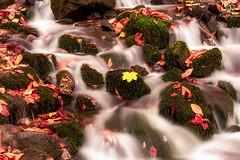 Rest in Flow (BeNowMeHere) Tags: ifttt 500px trip bolu colour fall fallcolours landscape restinflow turkey yedigller autumn color colorful colourful flow foliage travel