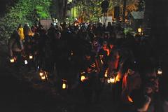 La-magia-del-bosco-di-notte-2016-46