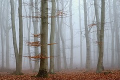 Nebel (Petra R.) Tags: nebel fog wald forest herbst autumn outdor landschaft landscape rot red deutschland germany