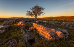 Golden (Pete Rowbottom, Wigan, UK) Tags: tree sunset colourfulsunset gnarly gnarlytree lonetree lonely limestonepavement limestone northyorkshire yorkshire landscape sunlight dusk goldenlight goldenhour peterowbottom settle winskill winskilltree winskillstones britain uk uklandscape mountains remote moorland nikond750 wideangle outdoor serene peaceful beautiful hills golden winter winterlandscape england