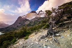 Vista a Los Cuernos del Paine (lpcortesfotografias) Tags: torresdelpaine tokina1116mm sonya58 chile landscape nature sunset tree mountains regiondemagallanes sonyalpha