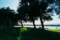 Tree Shadows (Taomeister) Tags: pakonf135 sanfrancisco gyoumuyou yashicat4superd 業務用100 fujifilmindustrialarchivalprint100 fujicolorindustrial100 paloalto california unitedstates us