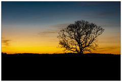Stunning Sunset (out of the car window!) (theimagebusiness) Tags: theimagebusiness theimagebusinesscouk scotland sky sunset sun tree bare branch twigs yellow orange sundown twilight dusk shadow light silhouette landscape landmark art beauty natural nature cloud farm location night outdoors outside open outdoor pretty rural travel uk visitscotland weather westlothian cold freezing frost sony rx compactcamera autumn wintery