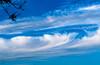 Cirrus uncinus (Eduard van Bergen) Tags: fibratus vertebratus clouds wölke wolken sky hemel himmel weather wind hot cold warm rain uncinus feather veer blue white weer knmi station home uppie over overhead foto photo photograph picture still atmosphere skin shell hull lucht air high troposphere nature sony dslr alpha sam outdoor