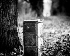 (Nico_1962) Tags: bokeh dof leica summicron 50mm nederland soeslo herfst fall autumn m240 bw zwartwit rangefinder leicam manualfocus primelens summicron50mm thenetherlands vintagelens