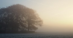 Winter Arrives. (elam2010) Tags: dawn sunrise misty mist frost countryside trees copse landscape wirral winter wintry light olympus penf moody sigma