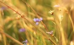 ...something (ela.ch) Tags: flower something beatles song macromonday windy crop