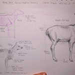 Atlas deer - Berlin Tierpark drawing session thumbnail