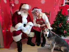 Barney (happy_hounds) Tags: dogdaycare dog daycare puppy pups boarding cagefree dogsofflickr purebred rescuedog happyhounds plymouthmichigan happyhoundsdogdaycare