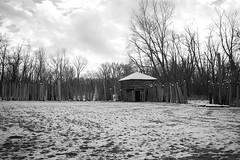 (Mr Dave Esmond) Tags: wisconsin fort atkinson koshkonog snow trees falling down fuji xe1 coshconong