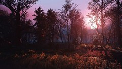 Swamp at sunset (Aphersis) Tags: thewitcher3 tw3 thewitcher sunset swamp scenery