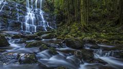 Nelson Falls (R. Francis) Tags: ryanfrancis ryanfrancisphotography tasmania tasmanianhighlands tassie nelsonfalls nelsonriver waterfall river stream water