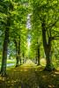 (c) Wolfgang Pfleger-0868 (wolfgangp_vienna) Tags: schweden sweden sverige schonen southsweden marsvinsholms slott marsvinsholmsslott ystad trees allee street parkway park